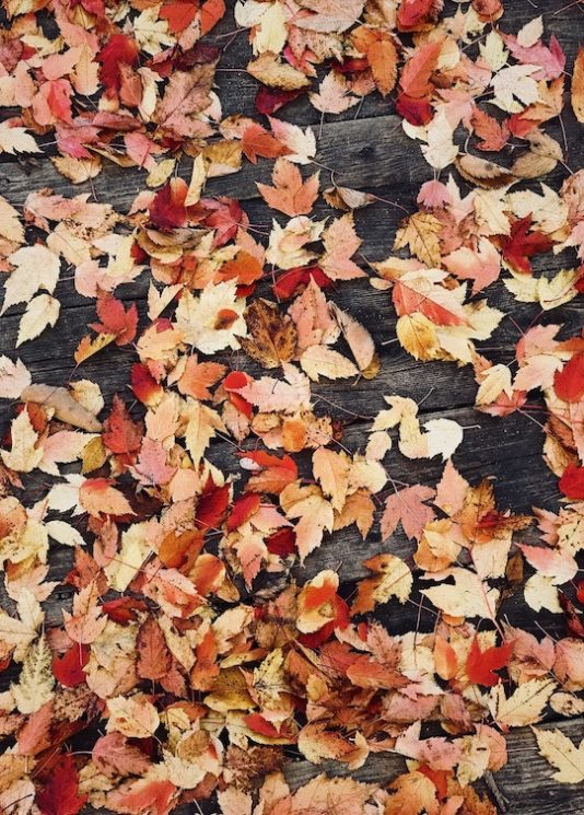 One Nation Outlet mall Paris, get inspiration from autumn colors
